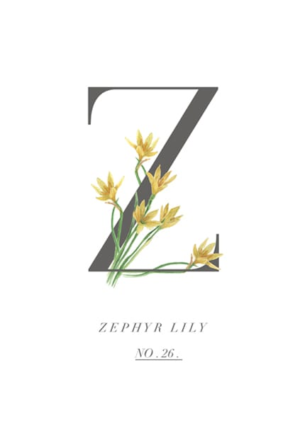 zephyr lily home gallery illustration