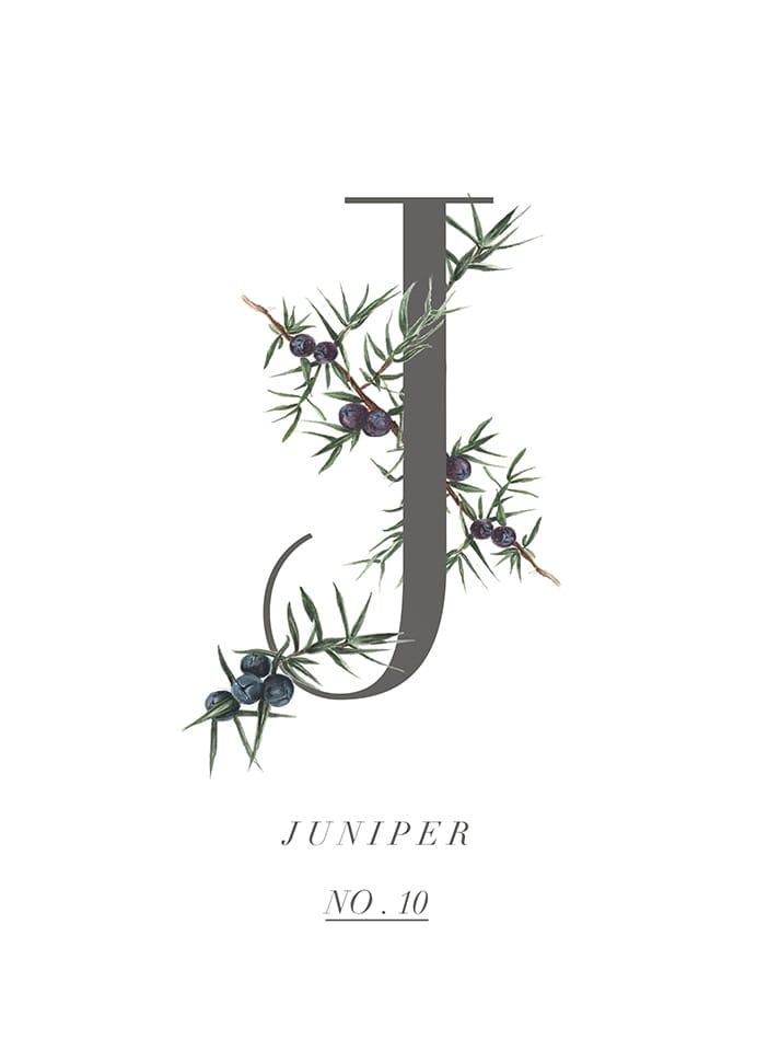 stylist live juniper berries