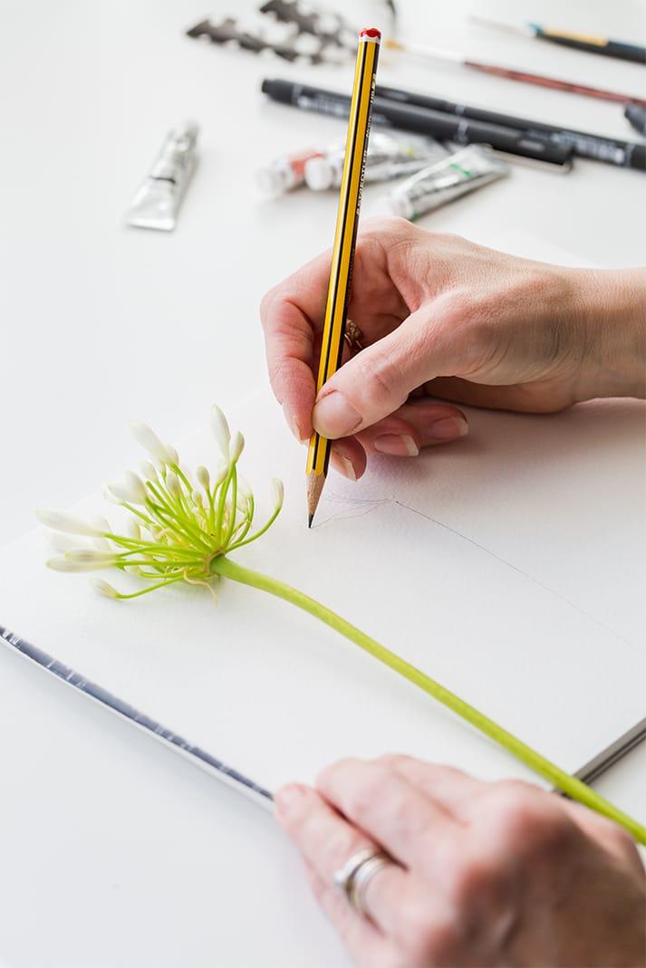 bespoke illustrations pencil