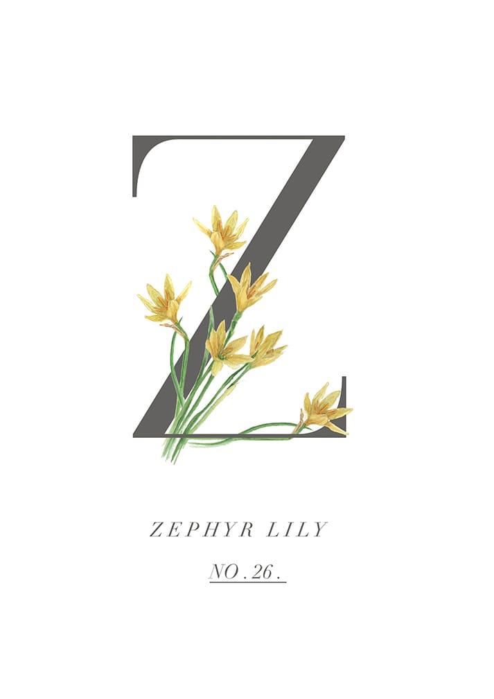 zephyr lily print original